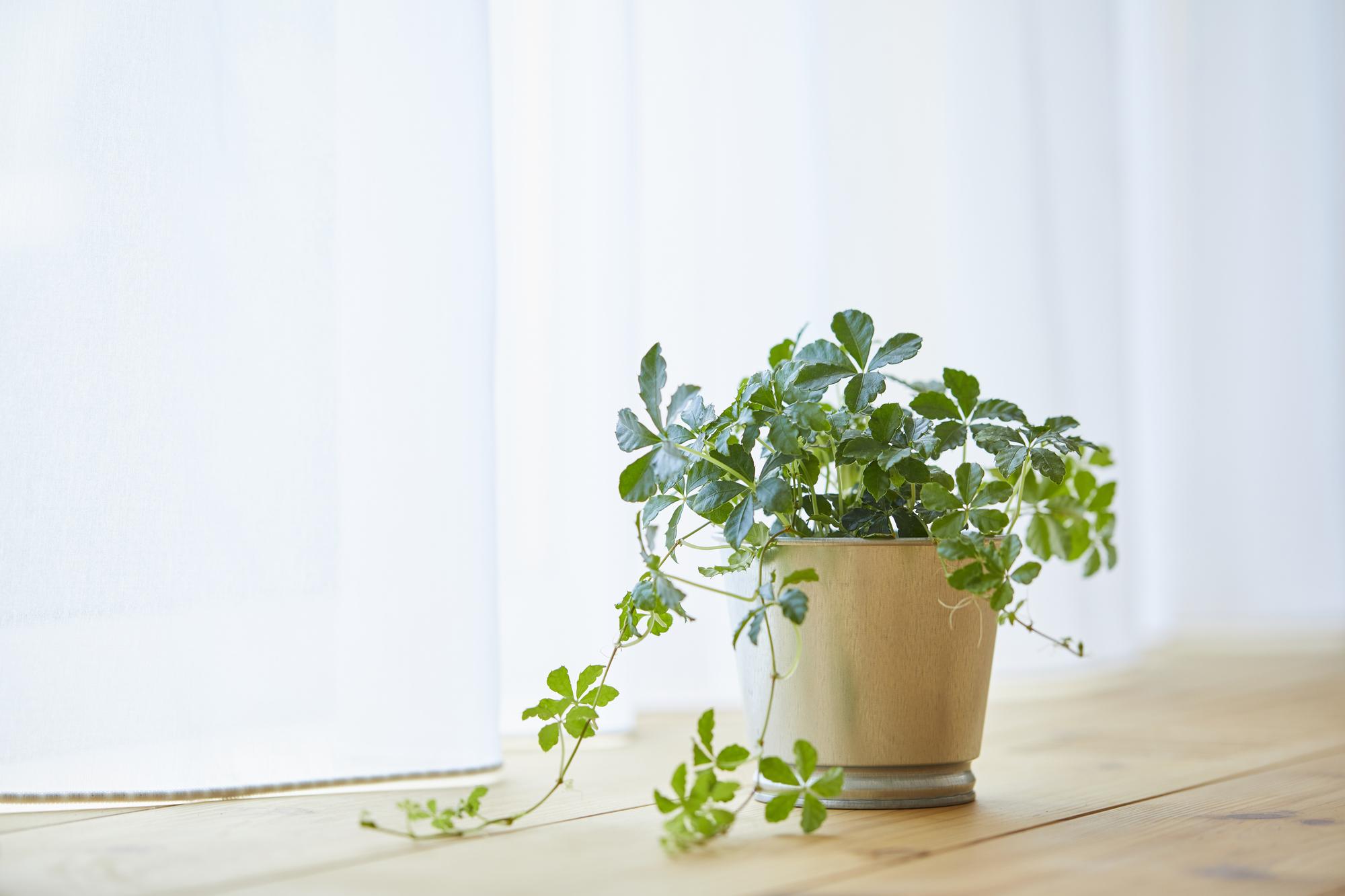 記事 【2021最新トレンドインテリア】③-観葉植物のある暮らし‐のアイキャッチ画像